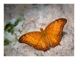 things to do stratford-upon-avon - butterfly farm